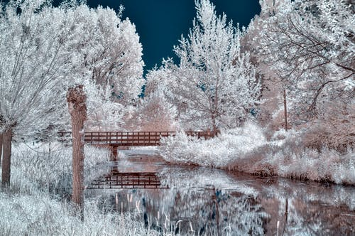 Free stock photo of bridge, false colors, infrared, landscape