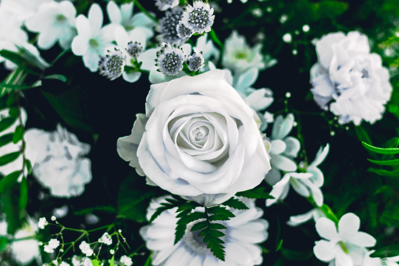 아름다운 꽃, 웨딩, 장미꽃, 하얀 장미의 무료 스톡 사진