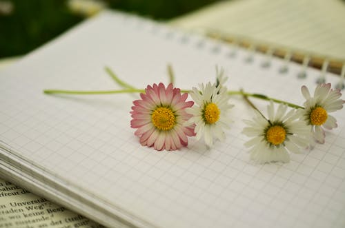 White and Pink Daisy Flower on a White Notebook