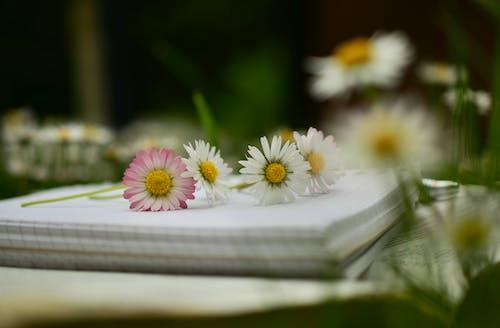 Gratis lagerfoto af blomster, flora, notesbog, springe ud