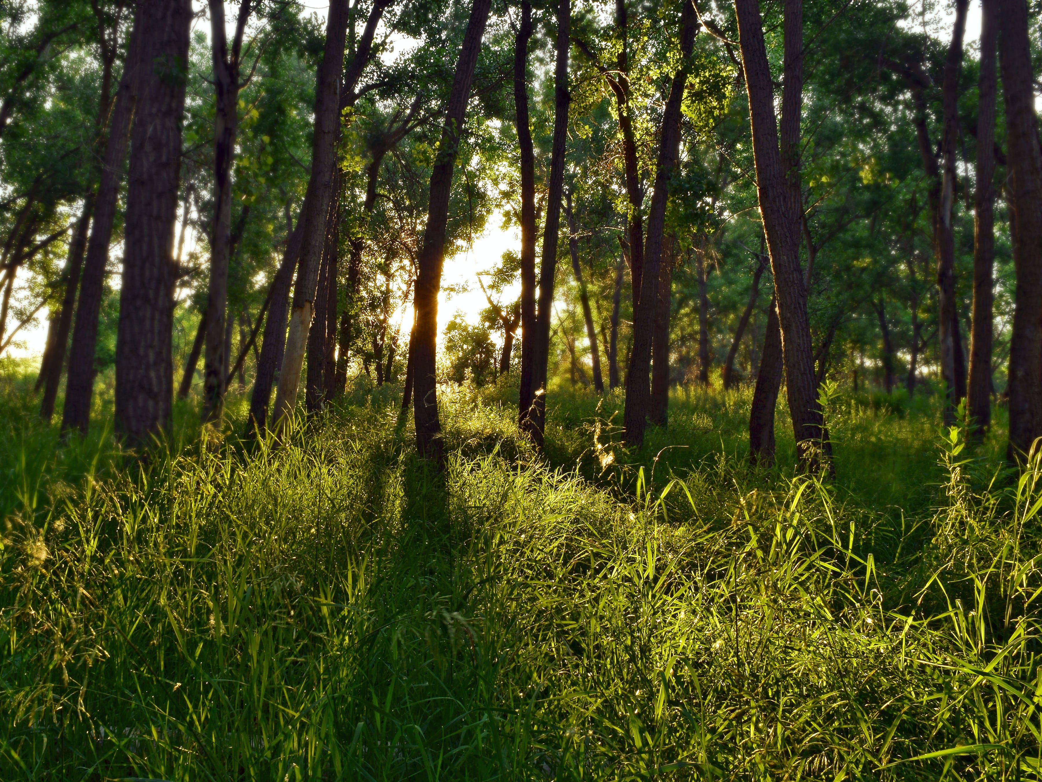 日光, 木, 森の中, 森林の無料の写真素材
