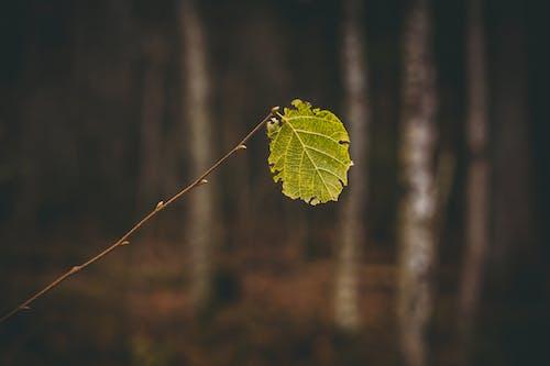Gratis lagerfoto af blad, brun baggrund, close-up, dagslys