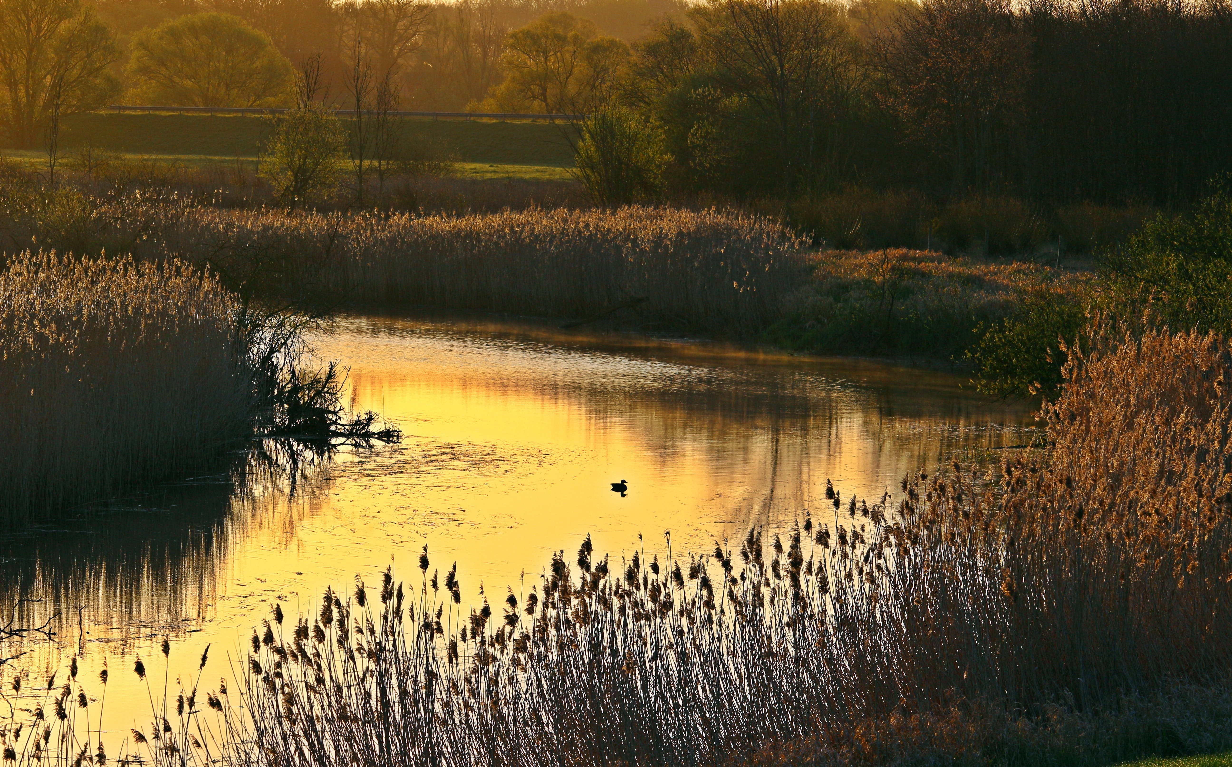 Flowing Water in a Riverside Near Brown Grass