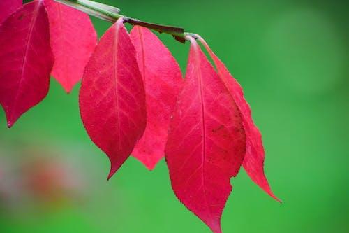 Безкоштовне стокове фото на тему «automne, gree, noel, rouge»