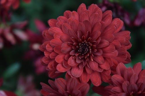 Безкоштовне стокове фото на тему «fleure, даніель абсі, квітка, крутий»