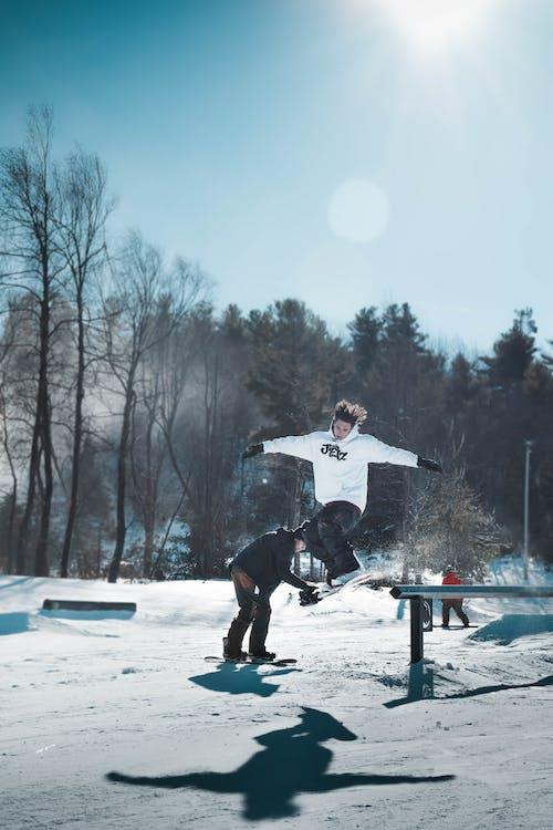 Immagine gratuita di alberi, azione, congelato, divertimento
