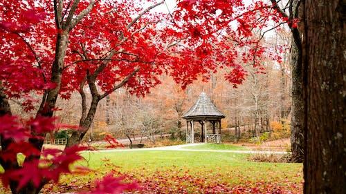 樹 的 免费素材照片