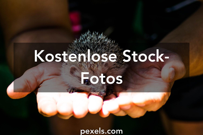 igel fotos pexels · kostenlose stockfotos