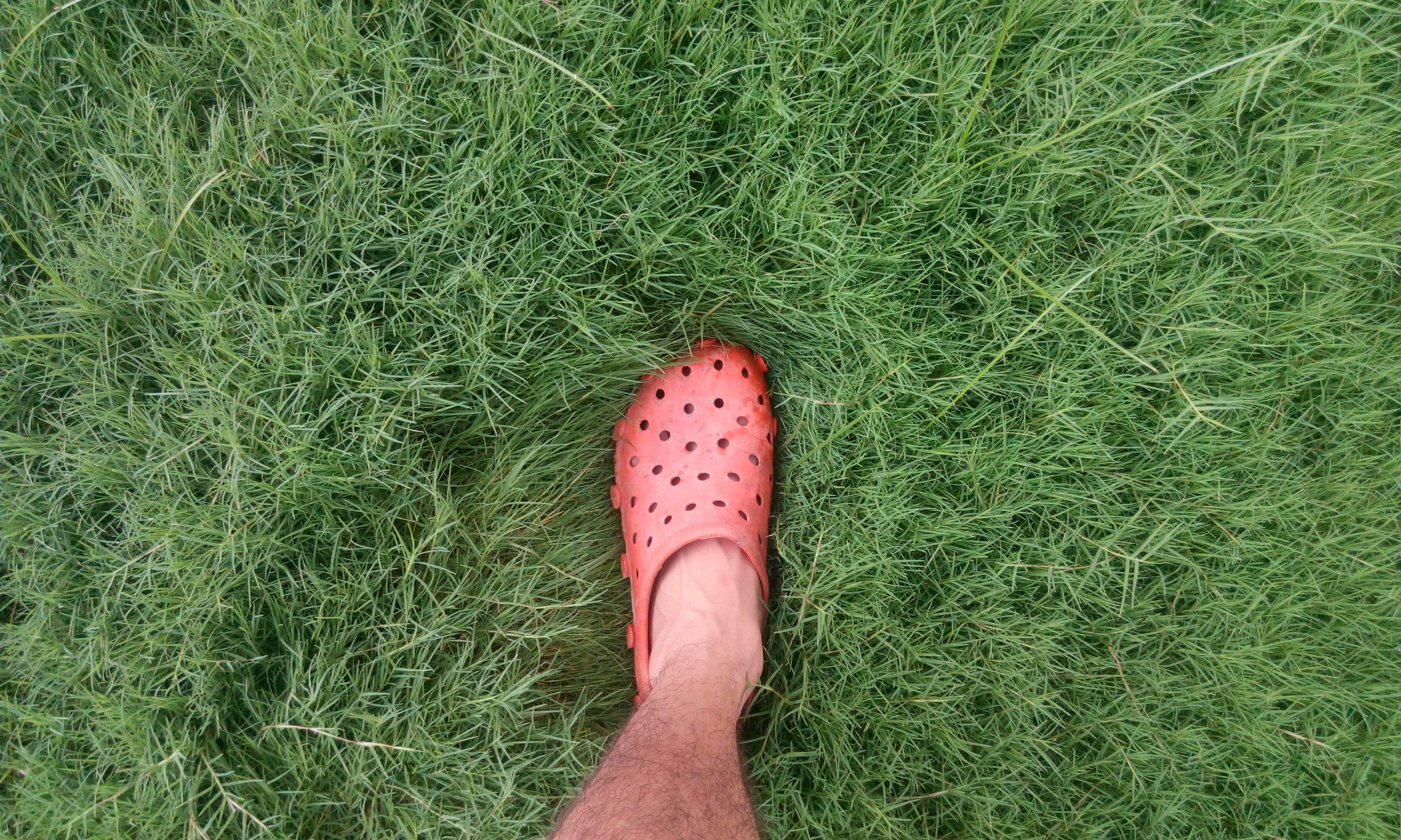 Person Wearing Orange Clog Shoe on Grass Field
