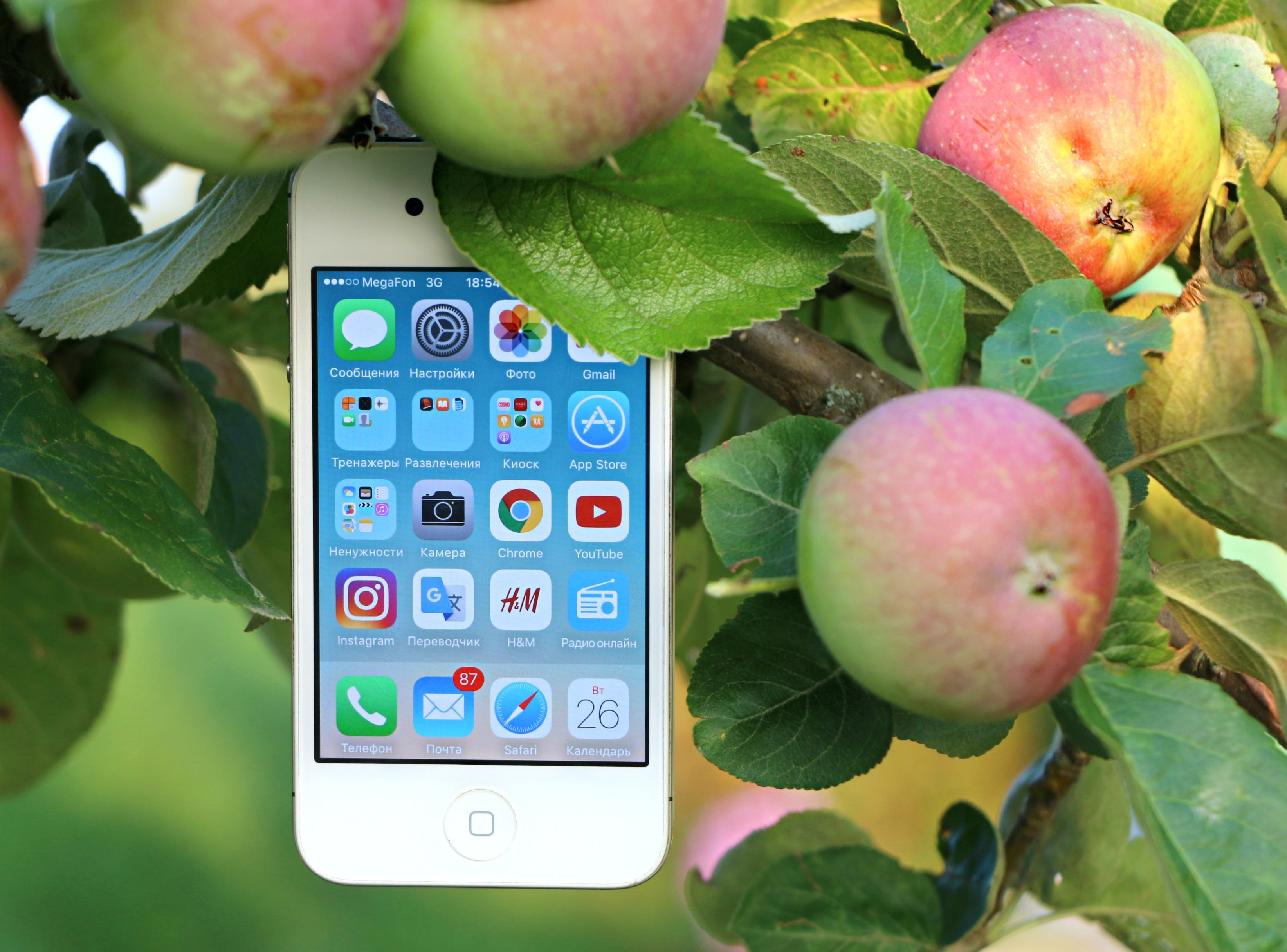 White Iphone 4 Hanging on Branch