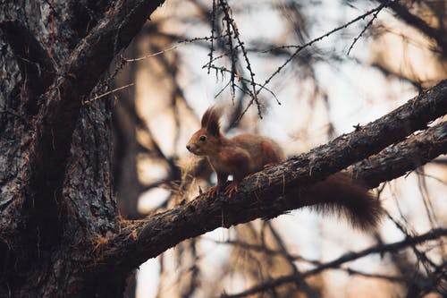 Close-Up Photo of Squirrel On Tree Branch
