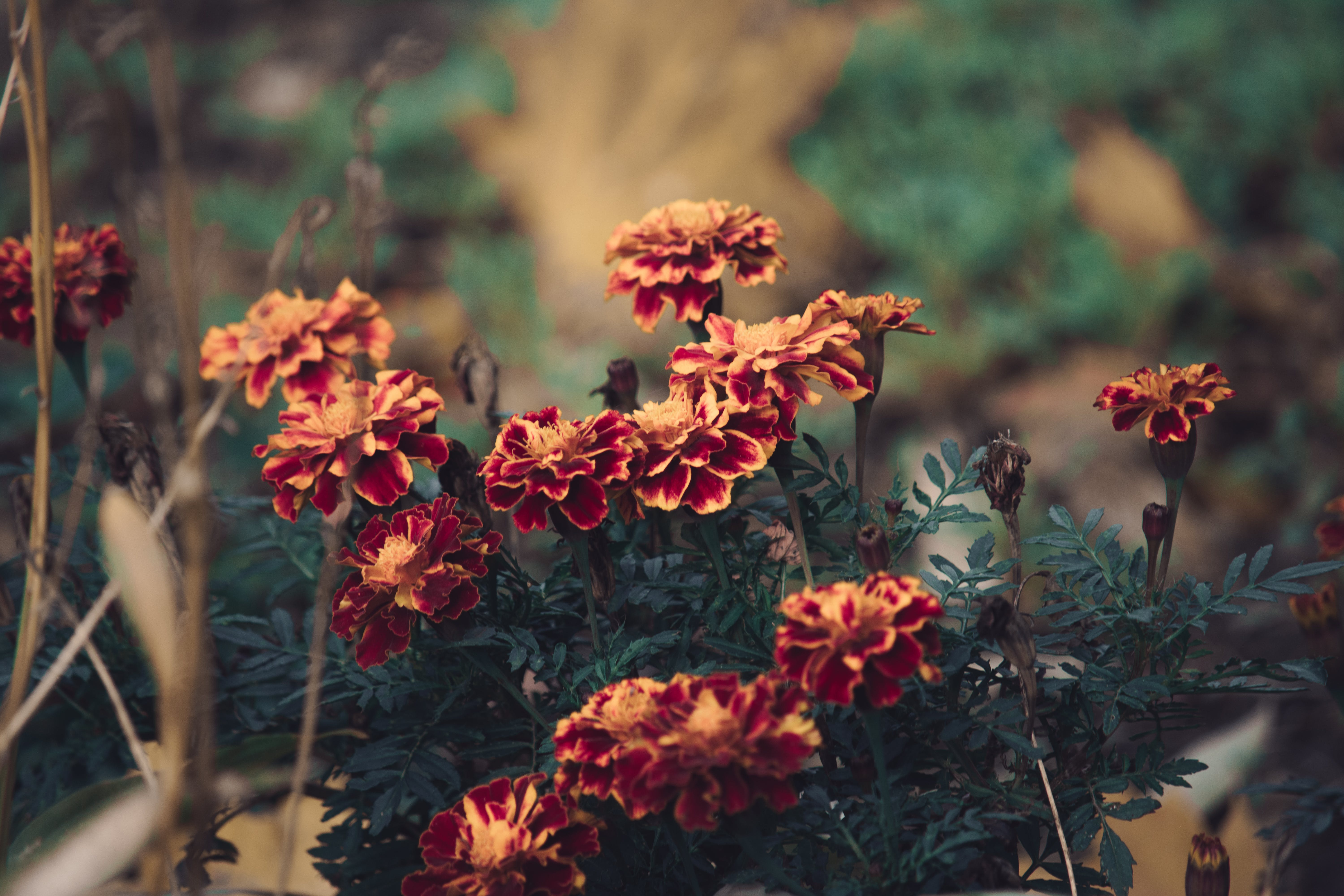 Free stock photo of bloom, blooming, blossom, decorative