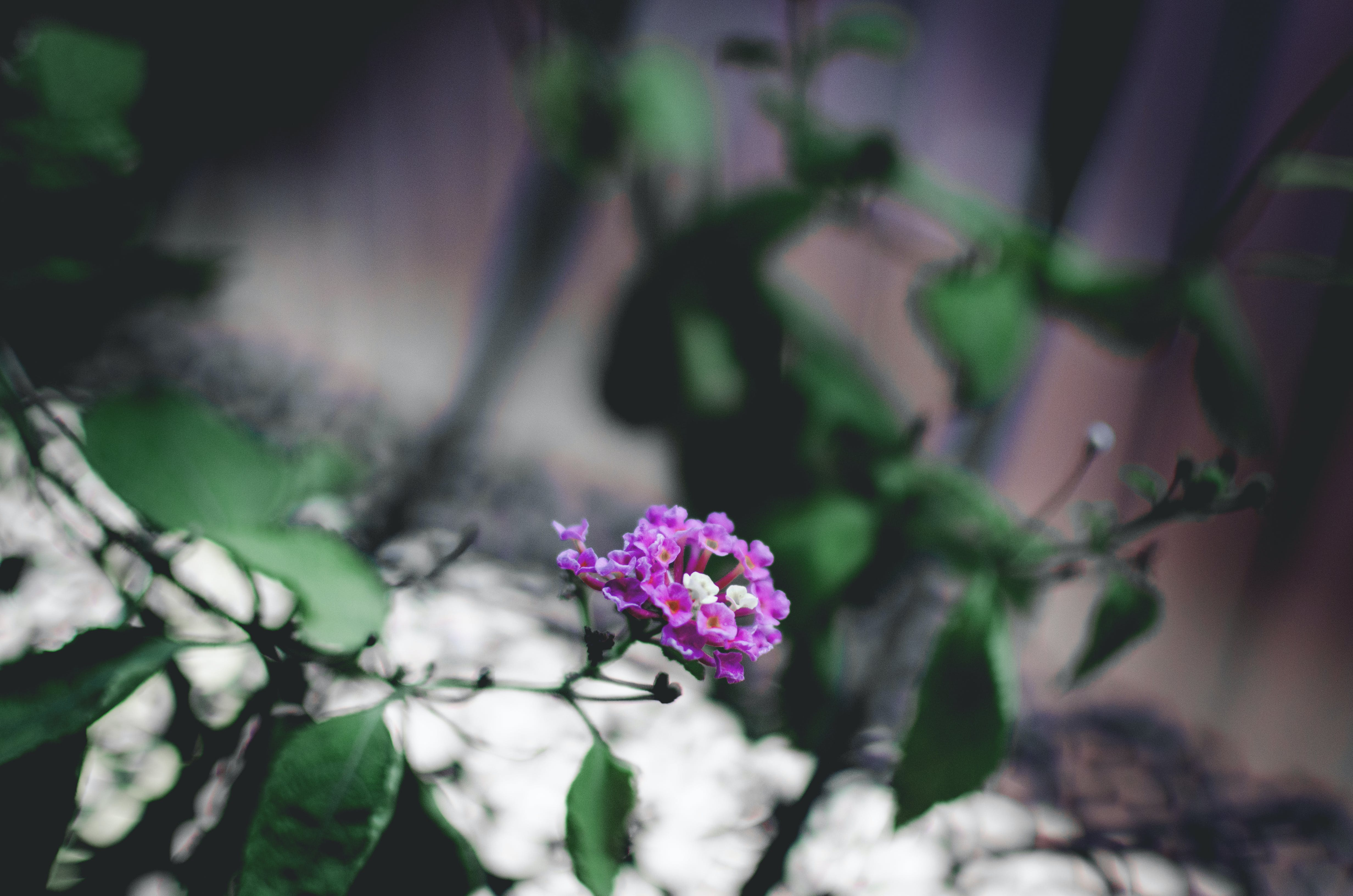 Free stock photo of bunch of flowers, nature, vignette