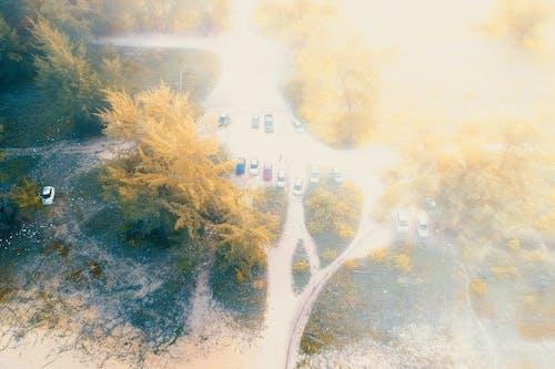 Foto d'estoc gratuïta de arbres, brillant, carretera, colors