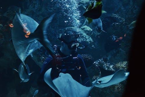 Foto stok gratis akuarium, menyelam, penyelam