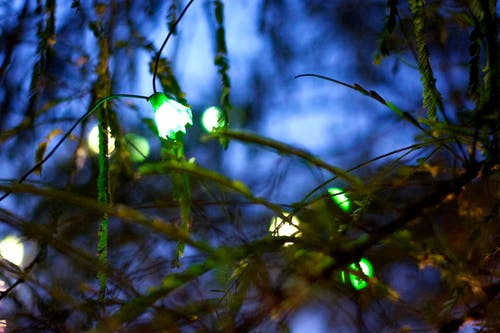 绿色灯泡 的 免费素材照片