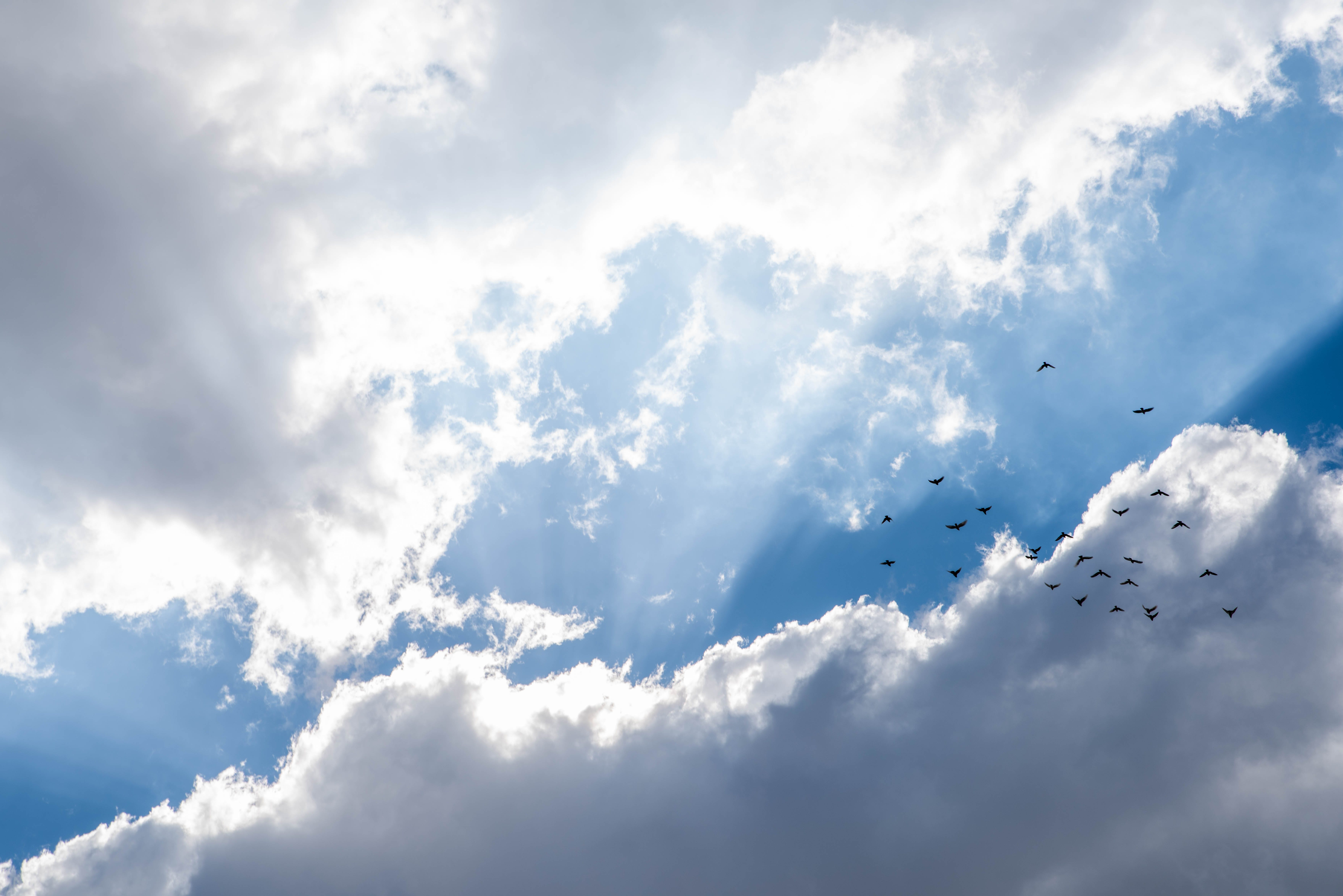 Free stock photo of birds, blue skies, clouds, lights