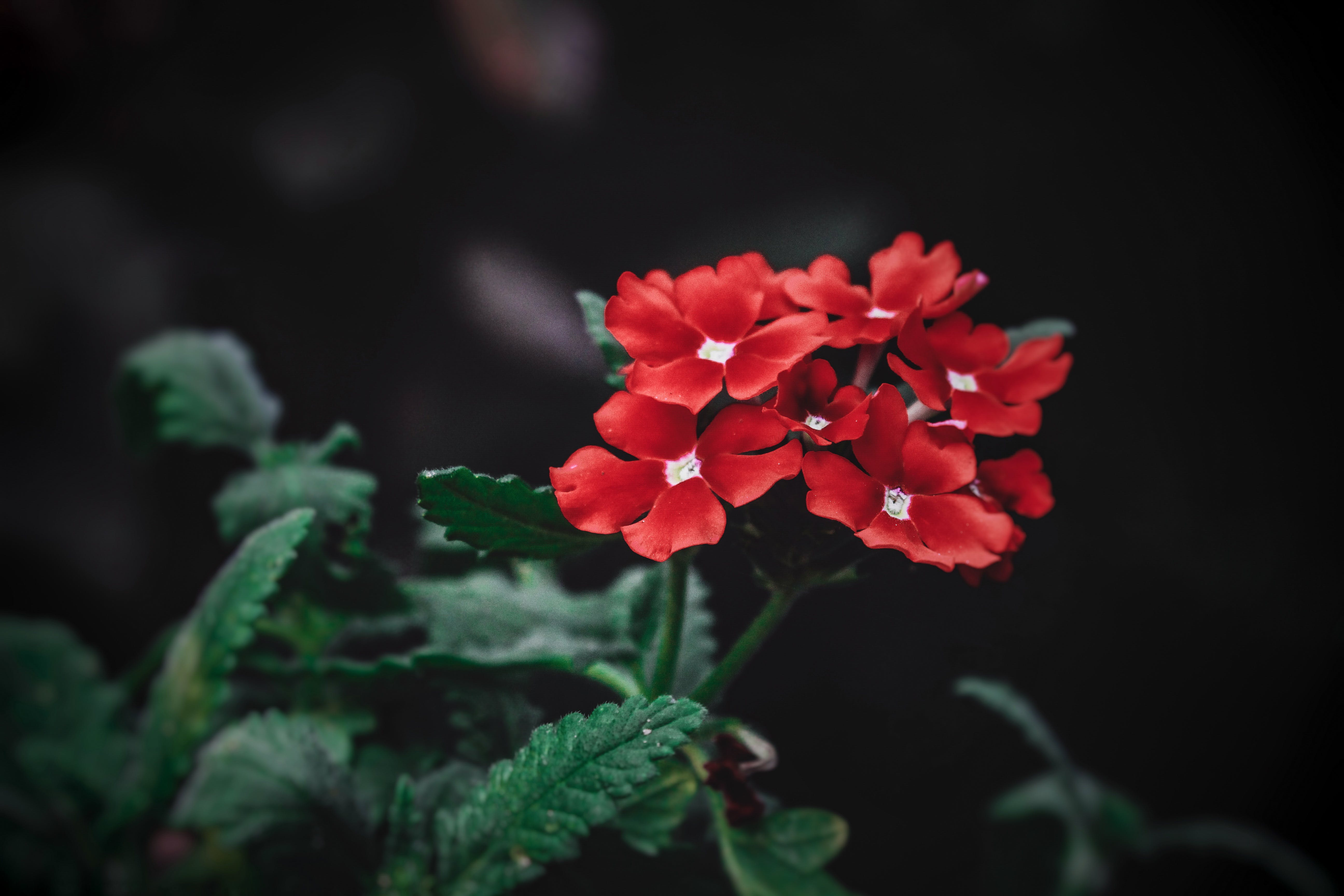 Free stock photo of beautiful flowers, beauty in nature, First flowers, flower