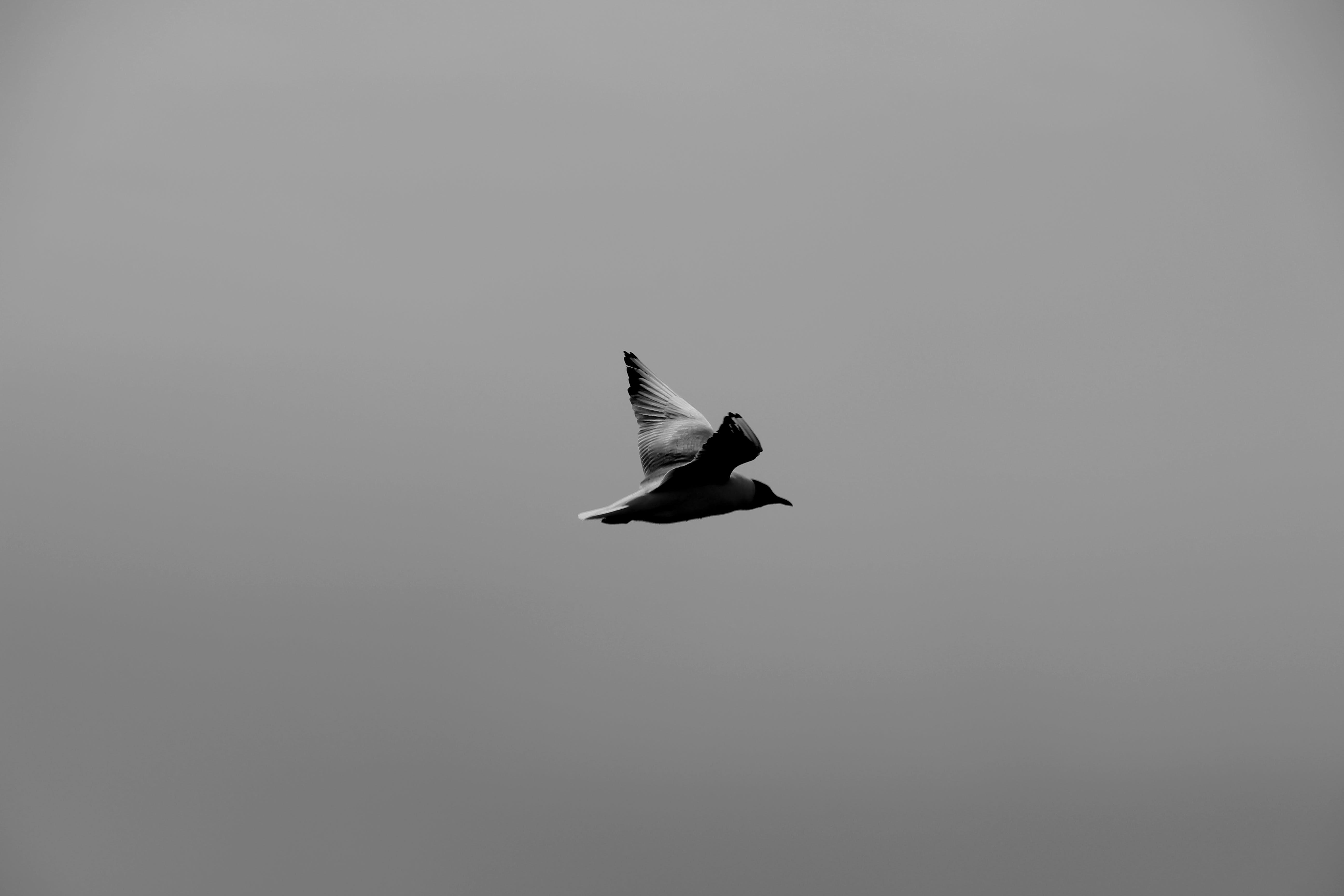 Gray and Black Bird