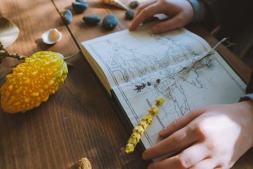 Ảnh lưu trữ miễn phí về bàn, bản đồ, cận cảnh, hoa