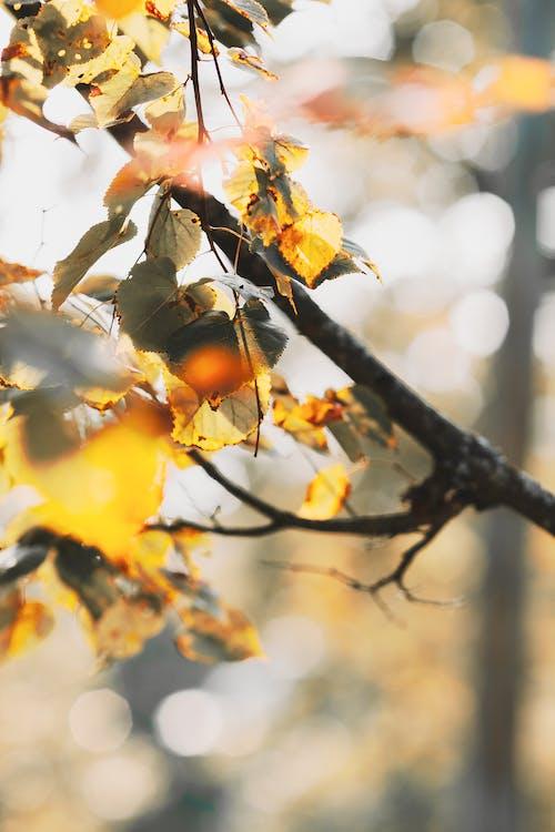 Foto profissional grátis de árvore, borrão, cores de outono, vertical
