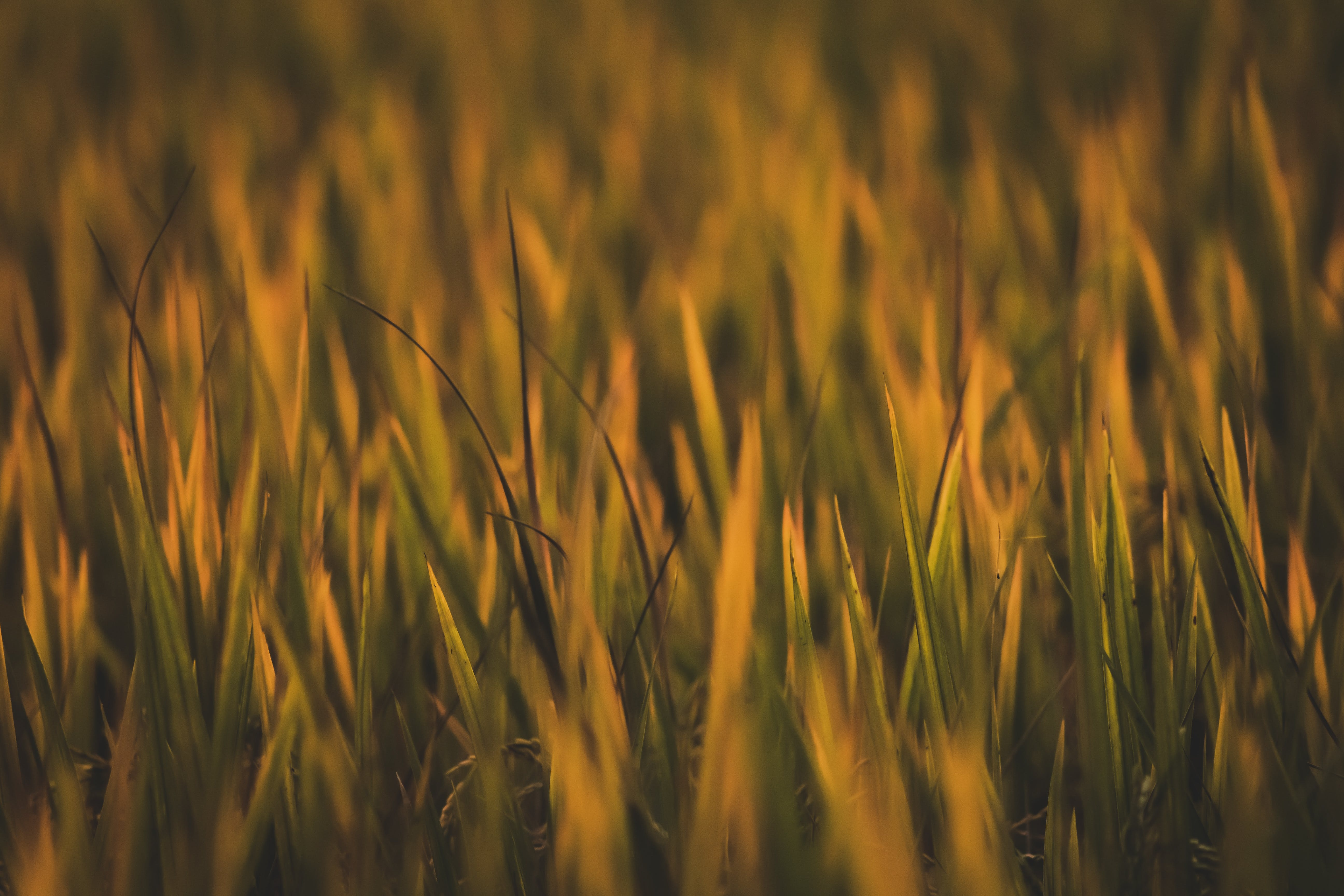 Close-Up Photo of Grass