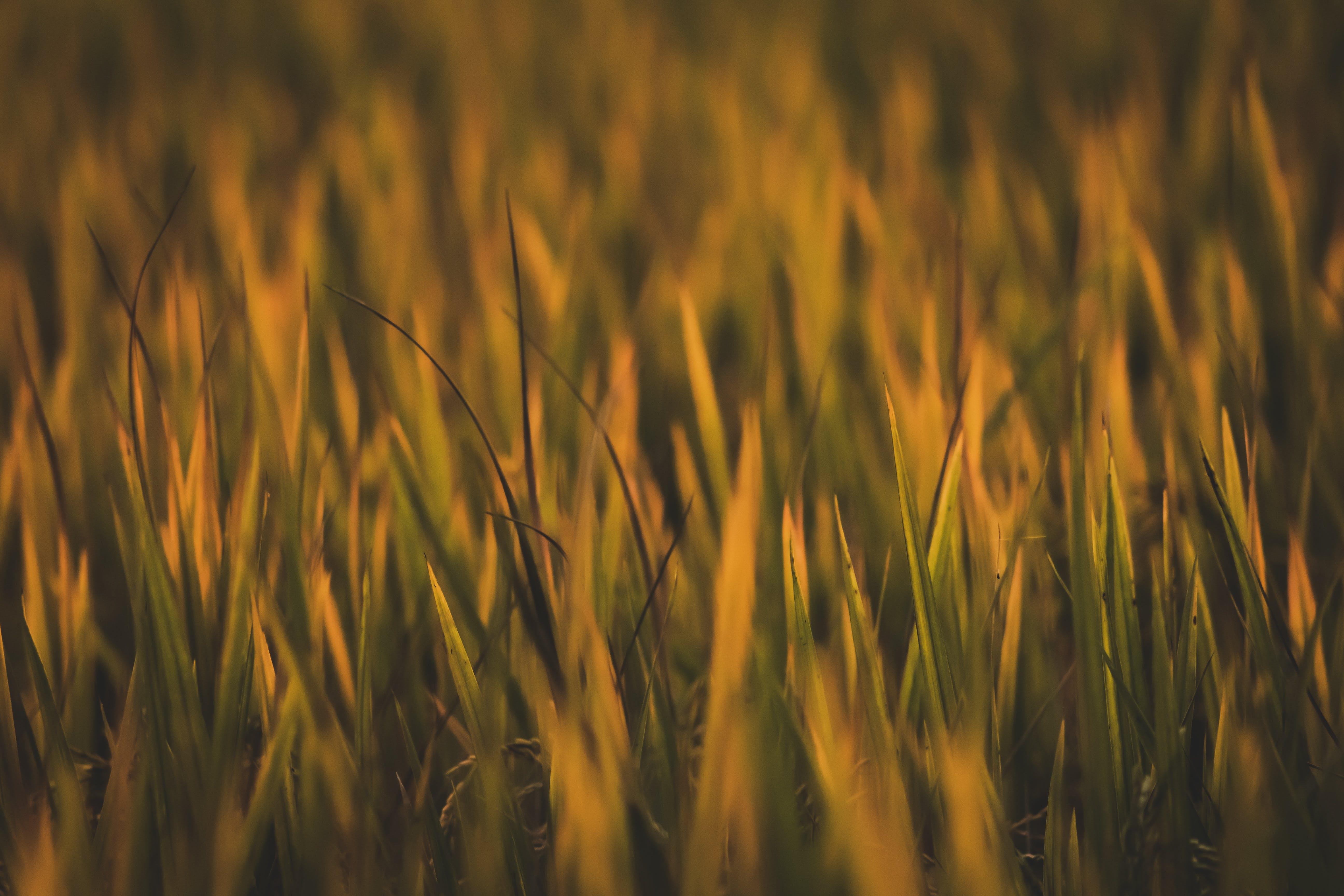 bitkiler, bulanık, bulanıklık, büyüme içeren Ücretsiz stok fotoğraf