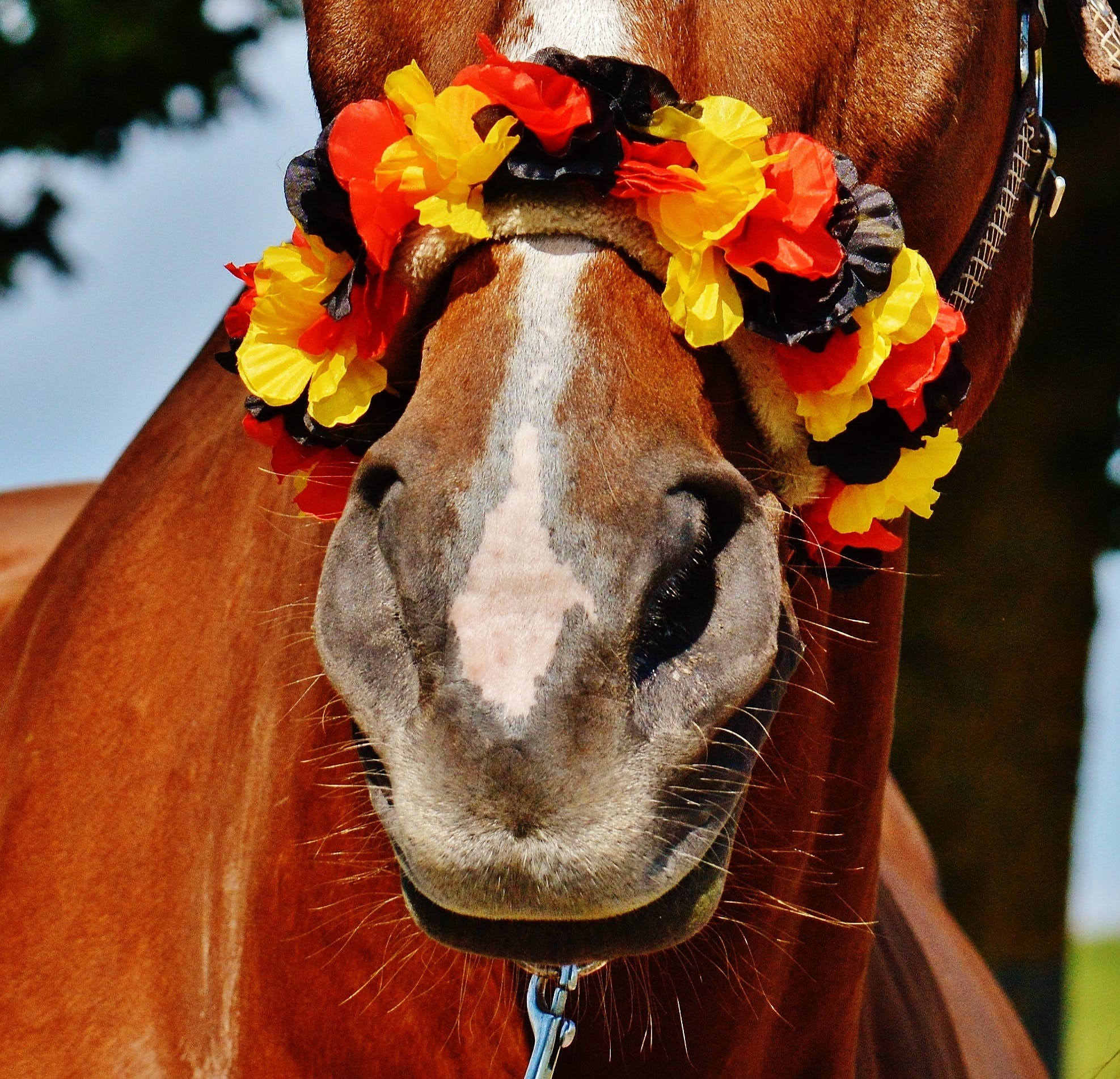 Brown Horse With Yellow Black and Red Flower Headdress