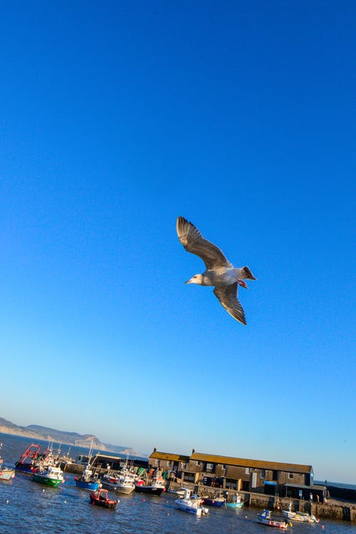 Free stock photo of blue skies, clear sky, haven, seagull