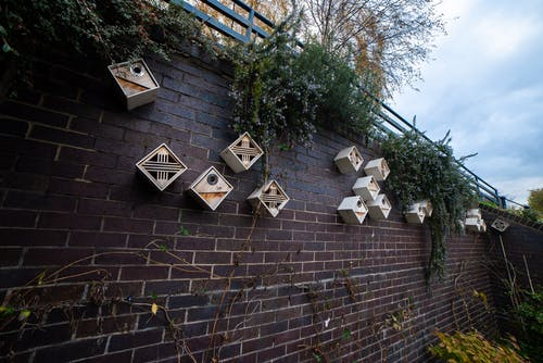 Free stock photo of bird house, brick wall