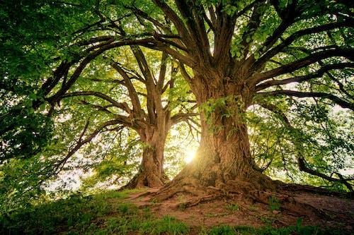 Základová fotografie zdarma na téma kmeny stromů, kůra, příroda, prostředí