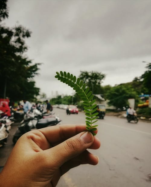 Foto d'estoc gratuïta de bonic, carrer, mà, verd