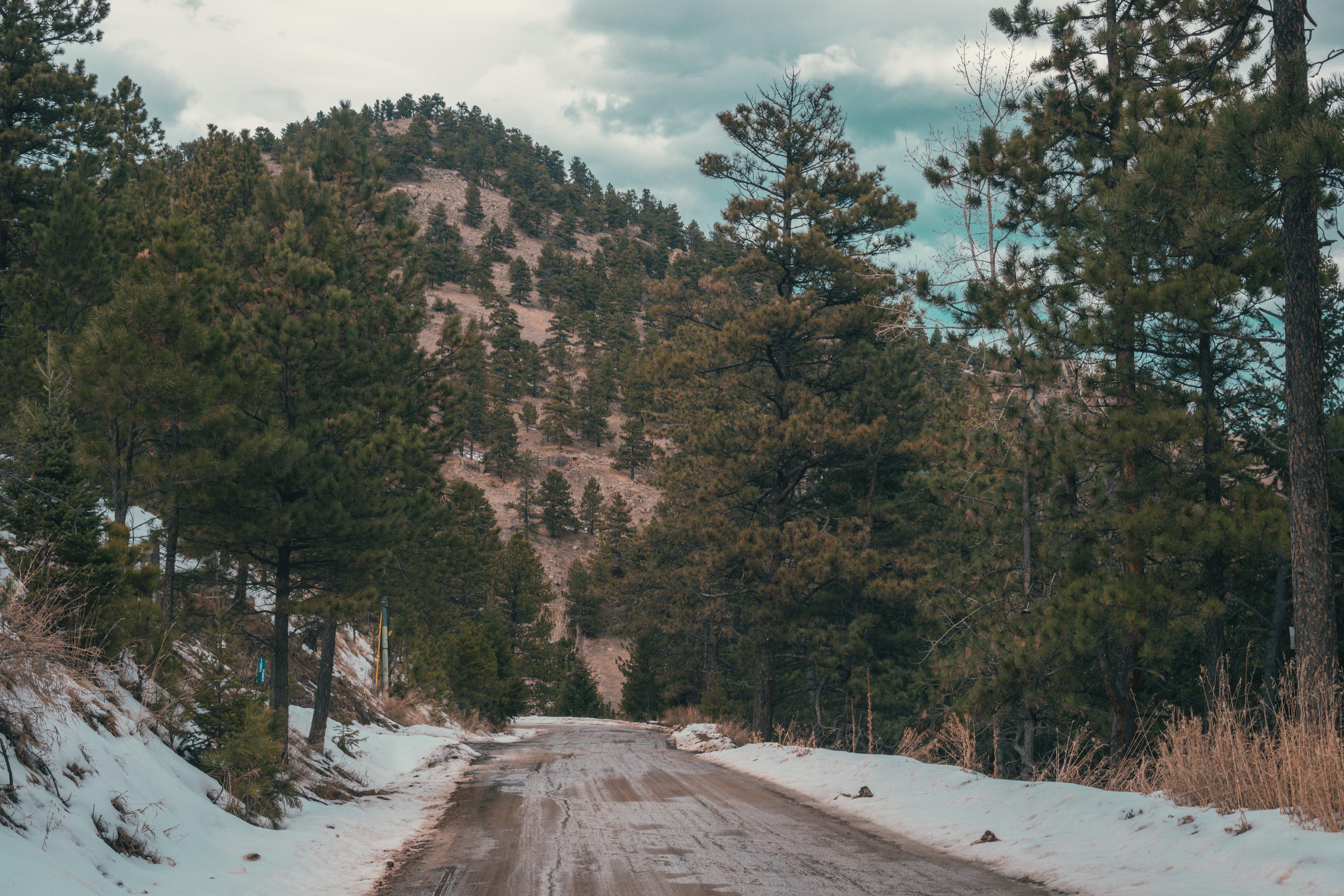 Fotos de stock gratuitas de arboles, bosque, carretera, cielo