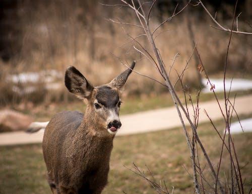 Kostnadsfri bild av bedårande djur, förtjusande, hjortar, söta djur