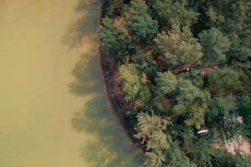 Δωρεάν στοκ φωτογραφιών με αεροφωτογράφιση, δέντρα, εναέρια άποψη, σώμα νερού