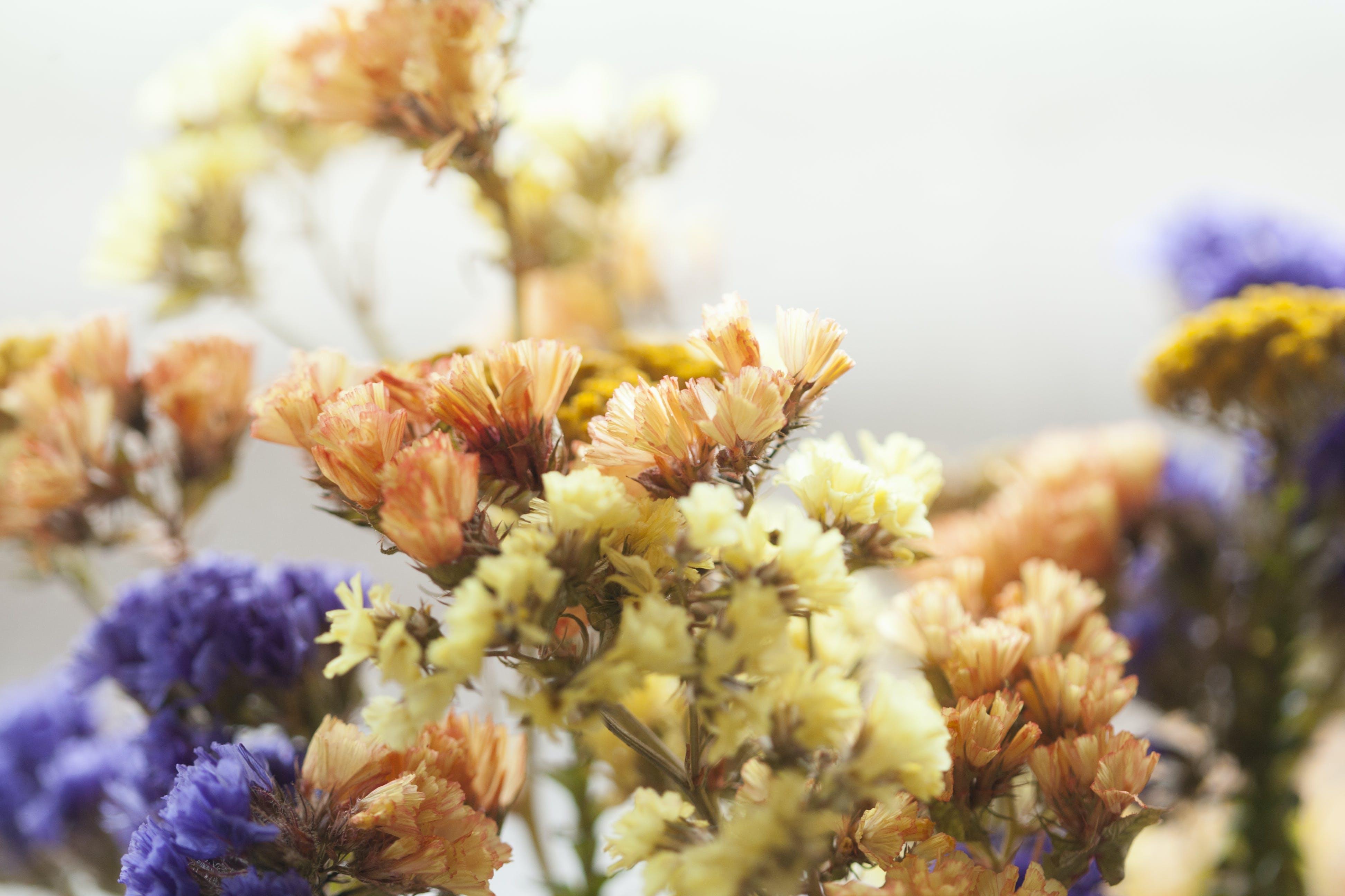 Darmowe zdjęcie z galerii z flora, fynbos, gromada, głębia pola