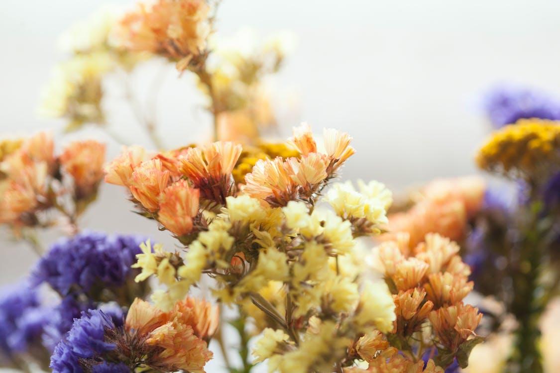 cận cảnh, cánh hoa, cụm