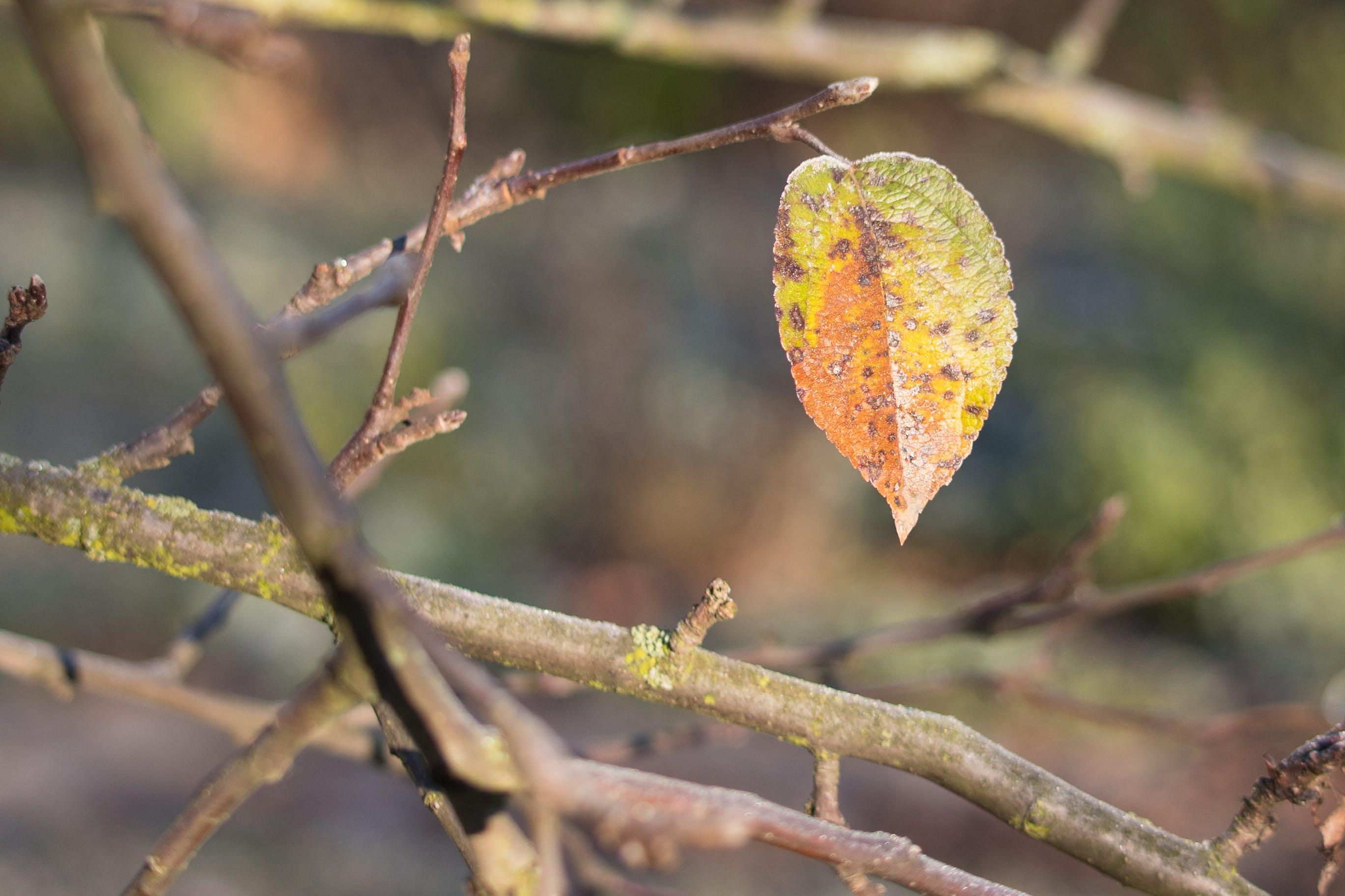 Gratis lagerfoto af blad på et træ
