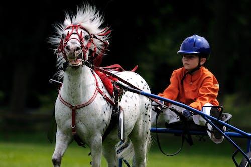 Základová fotografie zdarma na téma akce, dítě, jezdecký, kůň