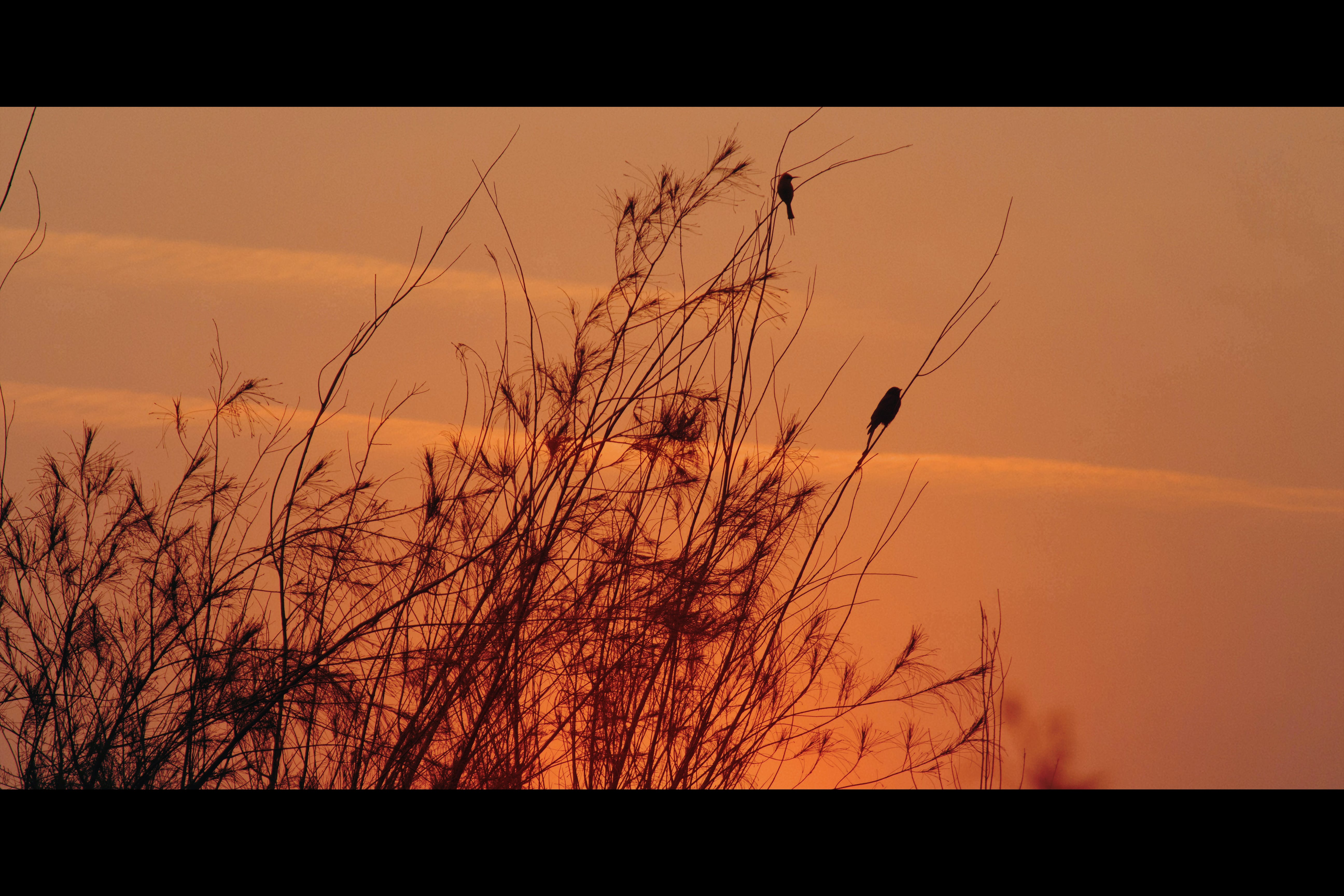 Free stock photo of bird, filmstrip, golden sunset, silhouette