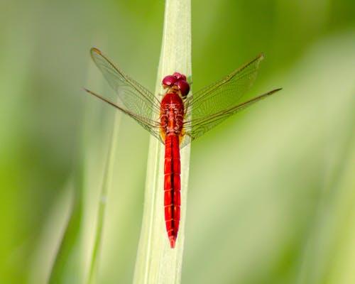Gratis lagerfoto af guldsmed, insekt, vildt dyr