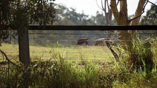 Photos gratuites de bétail, buisson, campagne, clôture en bois