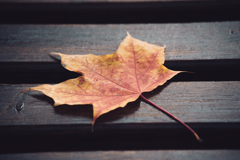Free stock photo of autumn, autumn colours, autumn leaves, beautiful