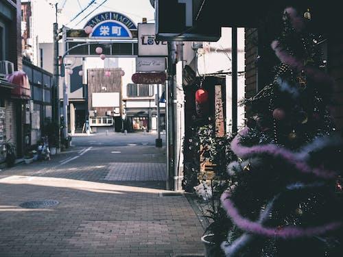Foto d'estoc gratuïta de arbre de Nadal, arquitectura, carrer, carretera