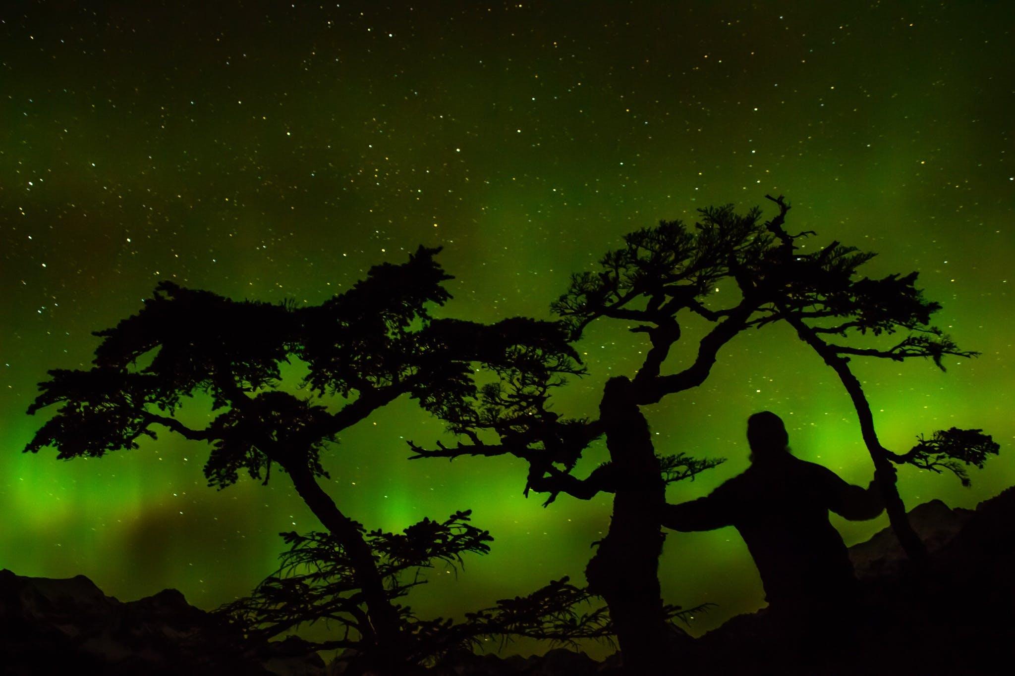 Kostenloses Stock Foto zu bäume, dunkel, grün, landschaftlich