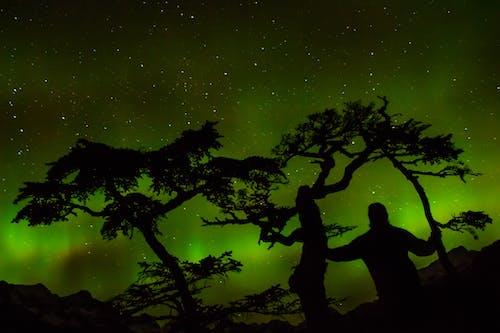 Kostnadsfri bild av aurora borealis, grön, ljus, mörk