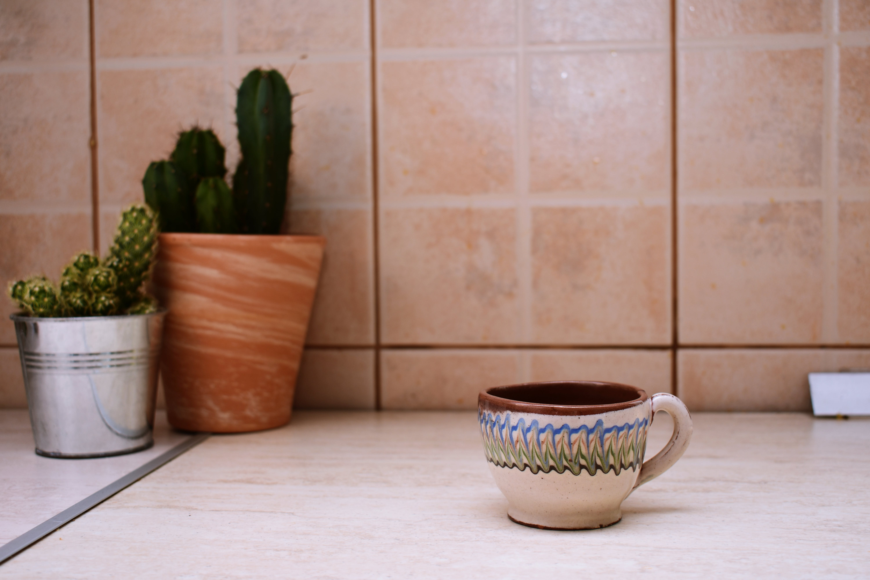 Gratis arkivbilde med kaktuser, kopp, krus, planter