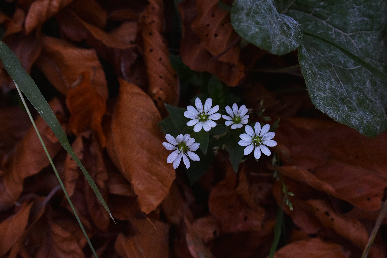 Ilmainen kuvapankkikuva tunnisteilla kasvikunta, kasvit, kuivat lehdet, kukat