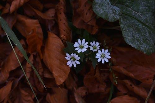 Fotobanka sbezplatnými fotkami na tému detailný záber, farby, flóra, kvety