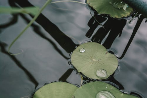 Fotobanka sbezplatnými fotkami na tému po daždi